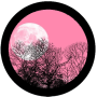 Full Pink Moon Day 2