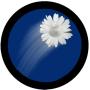 You Threw a Flower Moon Pie!