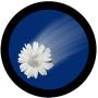 Hit by a Flower Moon Pie!
