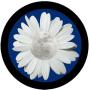 It's a Full Flower Moon!